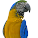 Real Talking Parrot