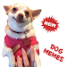 Download \ud83d\udc36 New Dog Memes Stickers (WAstickerApps) 1.2 APK